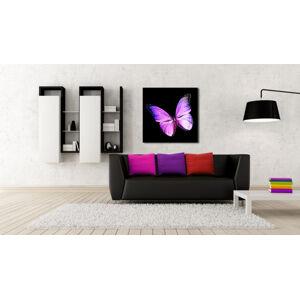 Obraz Fialový Motýl na zrcadle Mirrora 10 - 50x50 cm