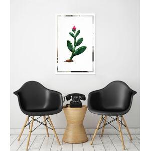 Obraz Kaktus na zrcadle Mirrora 65 - 60x40 cm
