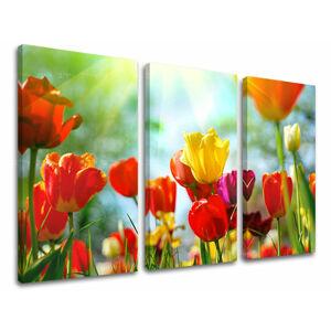 Obraz na stěnu 3 dílný KVĚTINY XOBKV145E30
